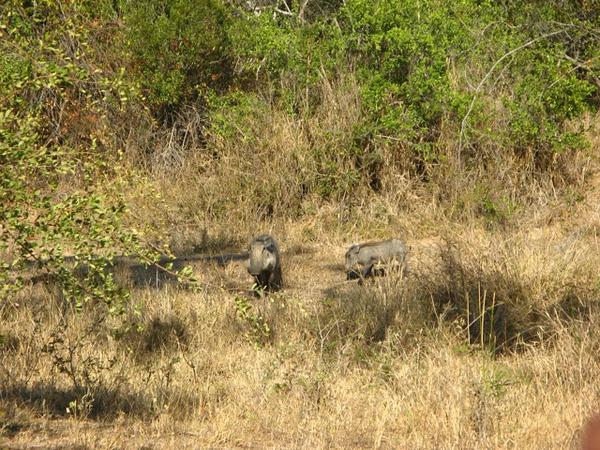 078 Warthogs
