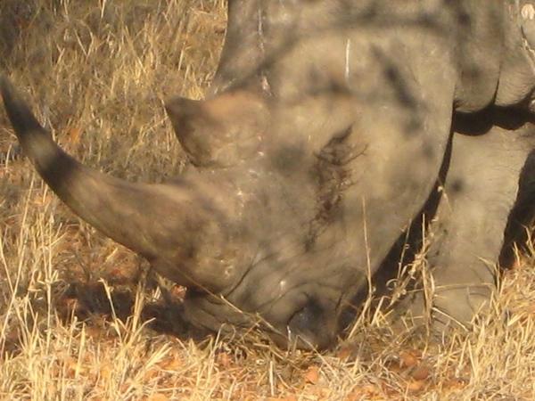 059 Rhino Closeup - Laurie