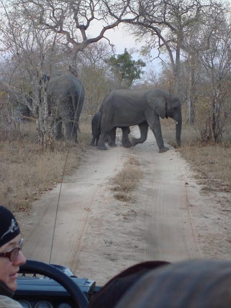 111 Elephant Crossing - McLaughlin