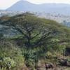 South_Africa_Nyala_Impala_01