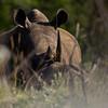 South_Africa_Rhino_06