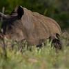 South_Africa_Rhino_07