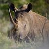South_Africa_Rhino_05