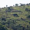 South_Africa_Rhino_01