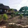 South_Africa_Zulu_Nyala_03