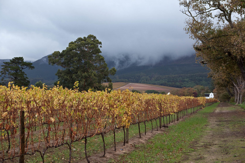 Groot Constantia, one of SA's oldest wineries, just outside Cape Town