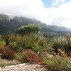 Devil's Peak seen from Kirstenbosch Botanical Gardens