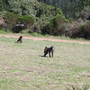 Some baboons haning outside the park (not part of monkey land).  They are too agressive to be part of the preserve.