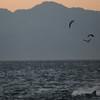 Death at dawn on False Bay