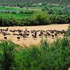 Ostrich farm near Oudtshoorn