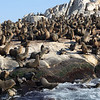 The noise is unending, the smell is unforgettable. Nearly 60,000 seals on Seal Island False Bay