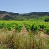 Near Stellenbosch