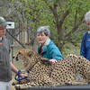"At Moholoholo Wildlife Rehabilitation Centre, a haven for abandoned and injured wildlife,<br /> Beth Thomas and John Ogburn stroke ""Bullet"", a 3 year old ambassador Cheetah.<br /> September 14, 2012"