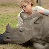 """A young volunteer trainer works as a surrogate mother for a 4 month old white Rhinoceros, """"Landela"""",<br /> at Moholoholo Wildlife Rehabilitation Centre, a haven for abandoned and injured wildlife,<br /> September 14, 2012"""