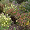 Some of the plants at Kirstenbosch Botanical Garden.<br />  Cape Town. South Africa<br /> August 27, 2012