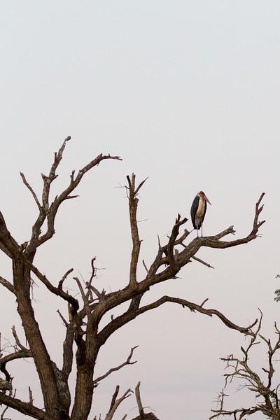 Tree stork
