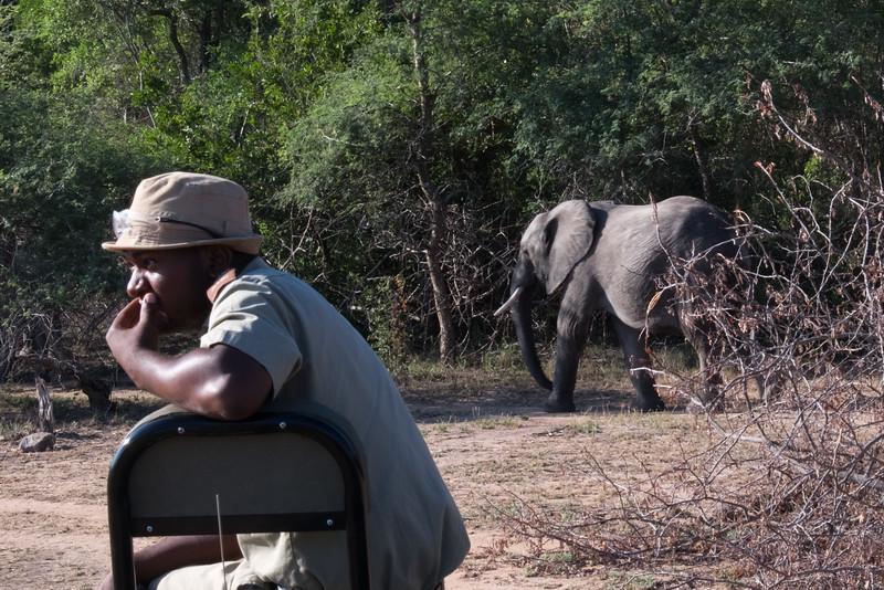 """""""elephant? What elephant?"""""""