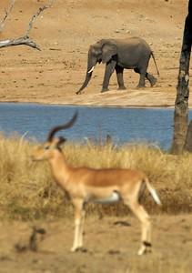 Impala and Elephant.