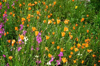 Field flowers, Rawsonville.