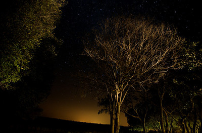 Night sky, with some light painted trees, Shimuwini bushveld camp.