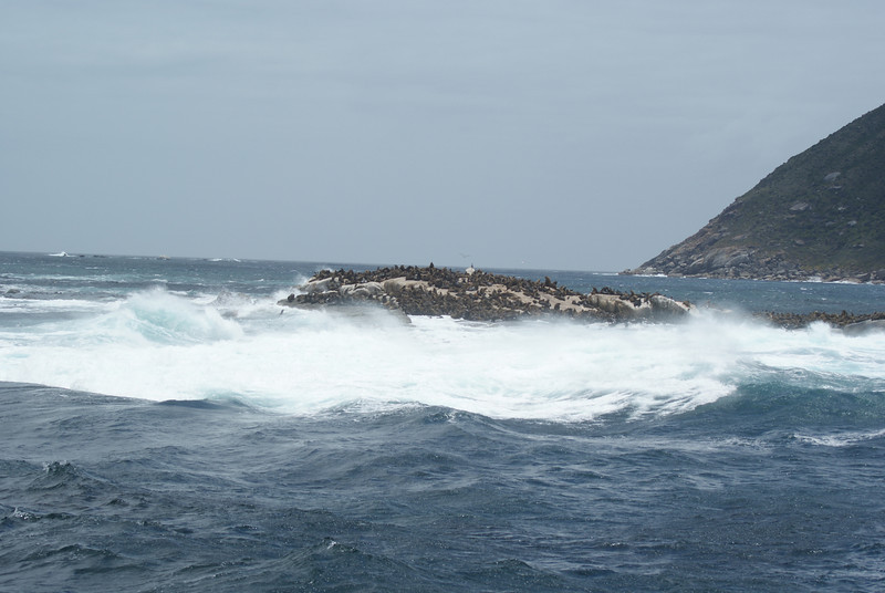 I went to Seal Island.  To see seals.