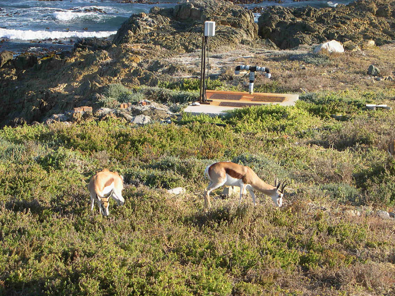 Some springbok, which were transplanted to Robben Island by the prison wardens.