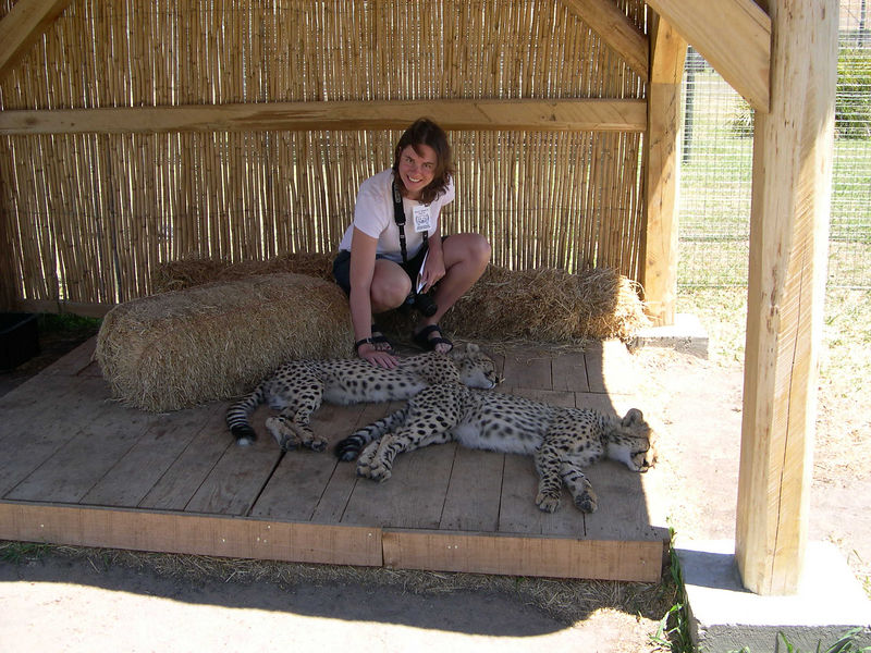 Liz petting a baby cheetah in the wine country near Stellenbosch.