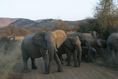 South Africa Game Parks 2004
