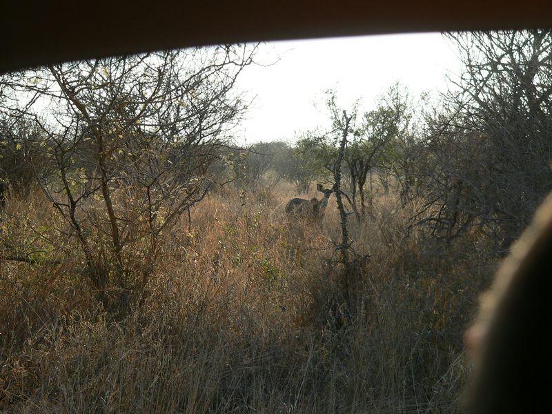 ...A Kudu!