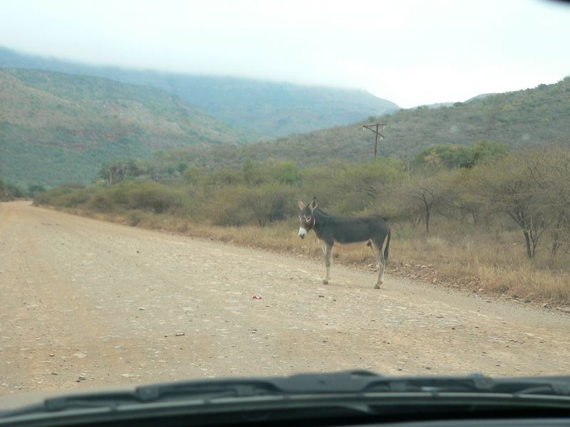 Wanting to get out of the car, we see a sign for Echo Cave off the main road and decide to do some exploring. This donkey decided to block our path for a while.