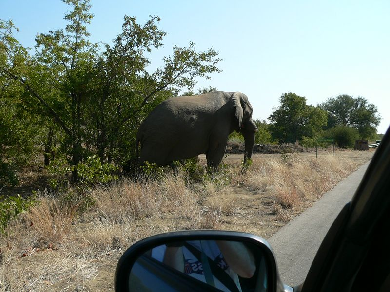 Elephant crossing.