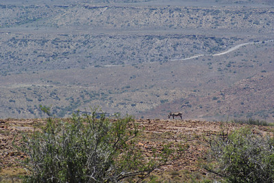 We saw plenty of zebra, antelopes...