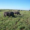 Our rhino friends
