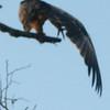 nice wingspan