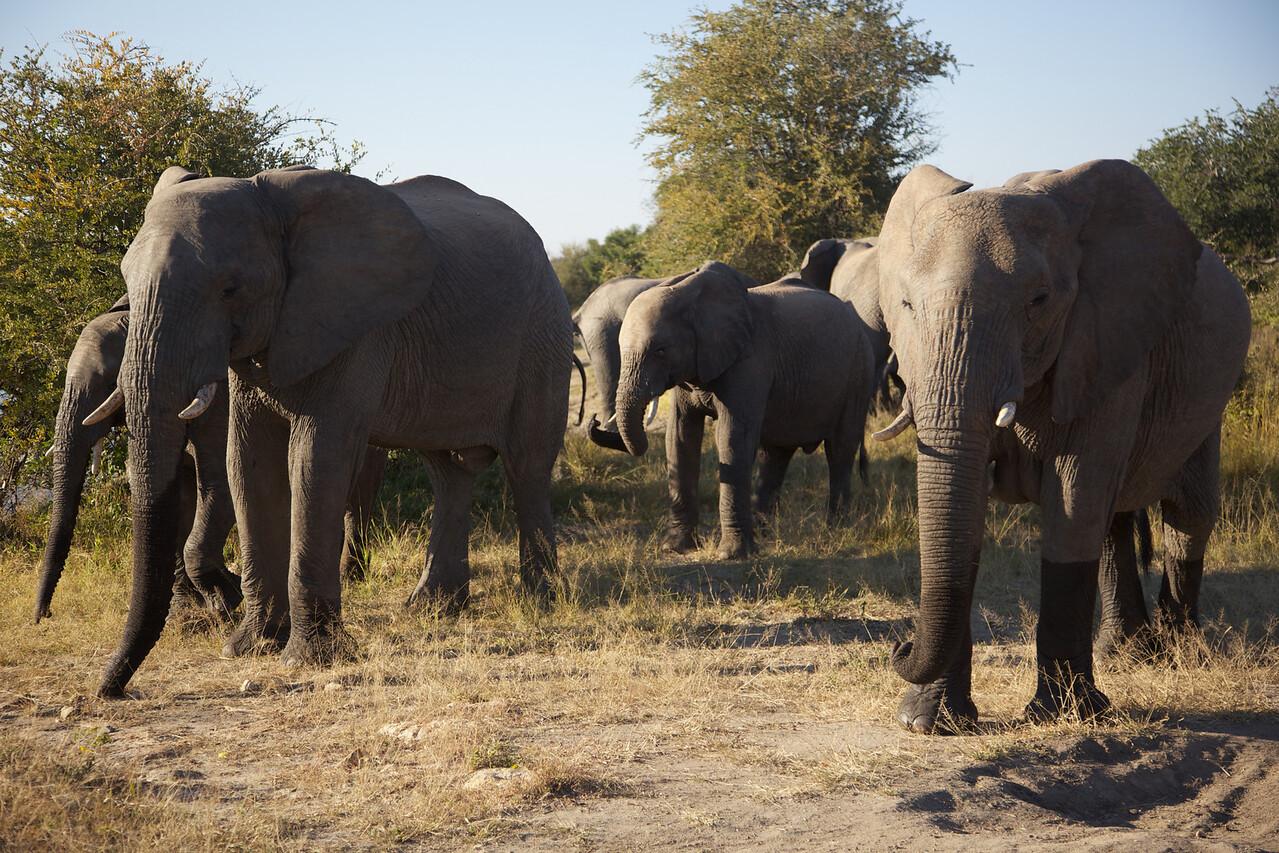 Hundreds of Elephants