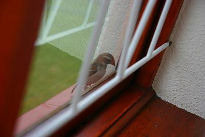 2007.12.12 : Miscellanious Birds, House etc...