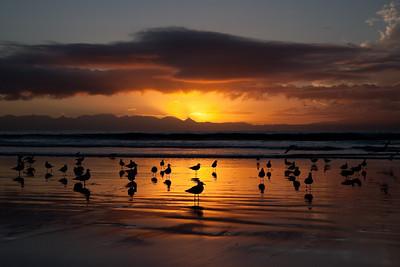 2010.03.30 : Seagulls and Sunrise on Fishoek