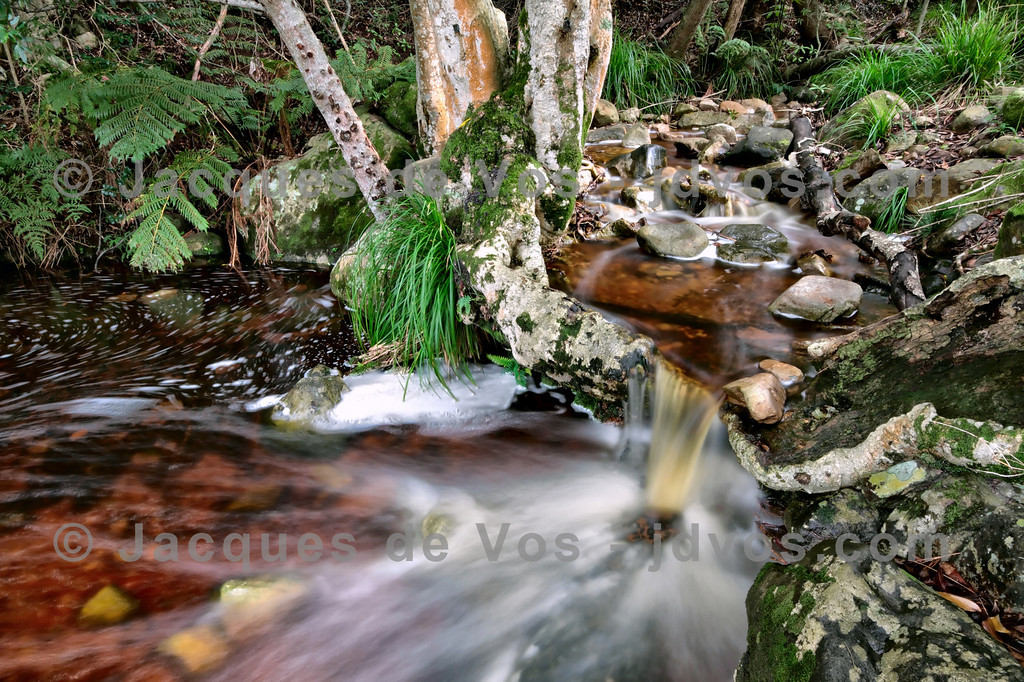 Cape Fynbos Stream<br /> <br /> A typical stream found against the slopes of the mountain ranges of the Cape Province.