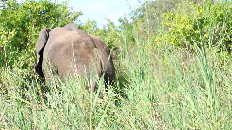 Elephant Video. Click Play to watch.