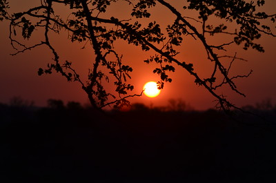 Sunset - Ngewenya Lodge - Kruger ……………….[ Copyright © - Photo by Barry Jucha ]