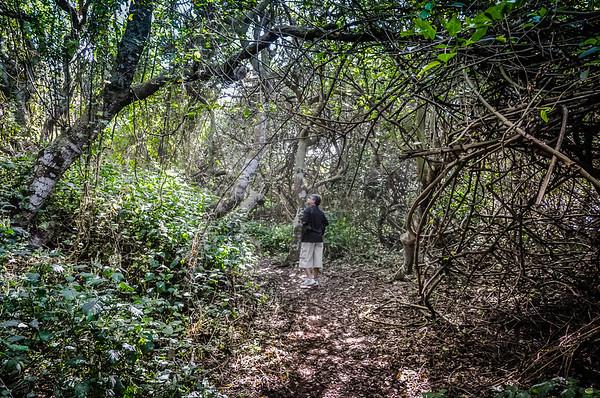 Umhlanga Lagoon Wilderness Trail