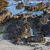 The beach of Robben Island