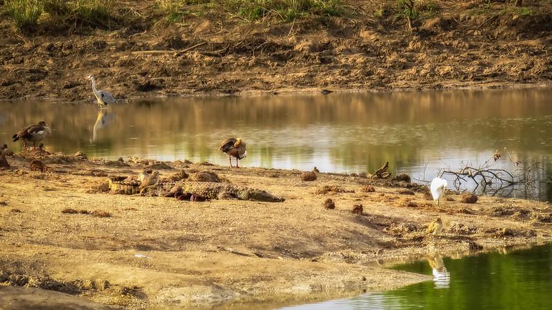 Water Life Mazithi Dam