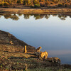 Lions at Nsemani Dam
