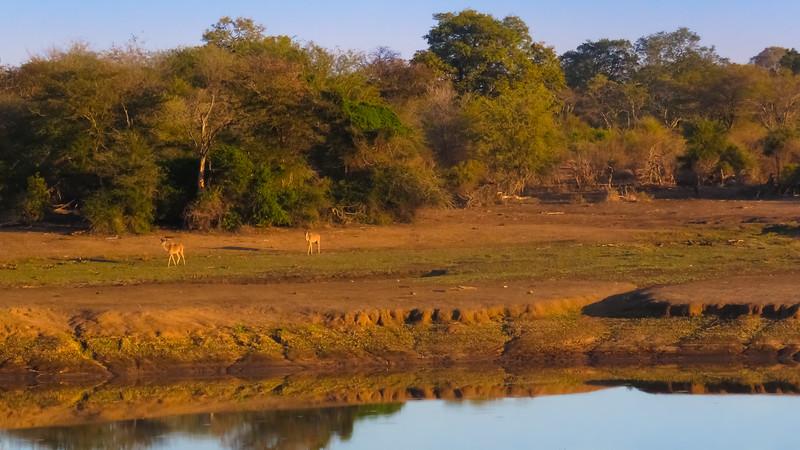 Near Nsemani Watering Hole