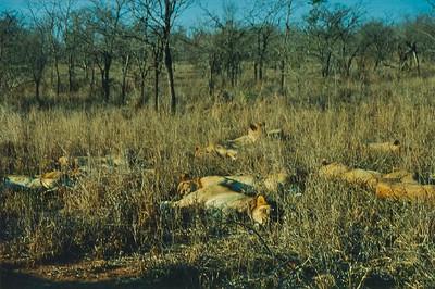 Ngala Safari South Africa