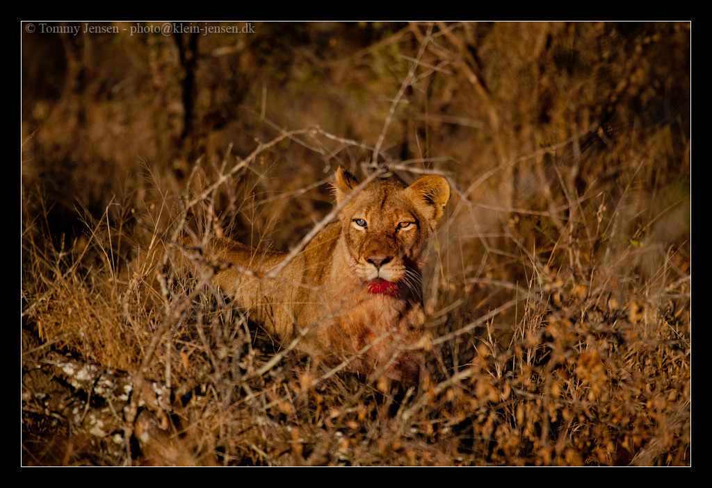 IMAGE: http://photos.klein-jensen.dk/Travel/South-Africa/South-Africa-2011/i-L4s9h8R/1/X2/20110730southafrica20110026-X2.jpg
