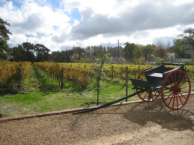 Winelands: Stellensboch & Franschhoek