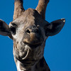 Giraffe looking down at me. Hluhluwe-Imfolozi Game Reserve, South Africa