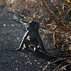 Baby baboon. Tiny little guy... Hluhluwe-Imfolozi Game Reserve, South Africa